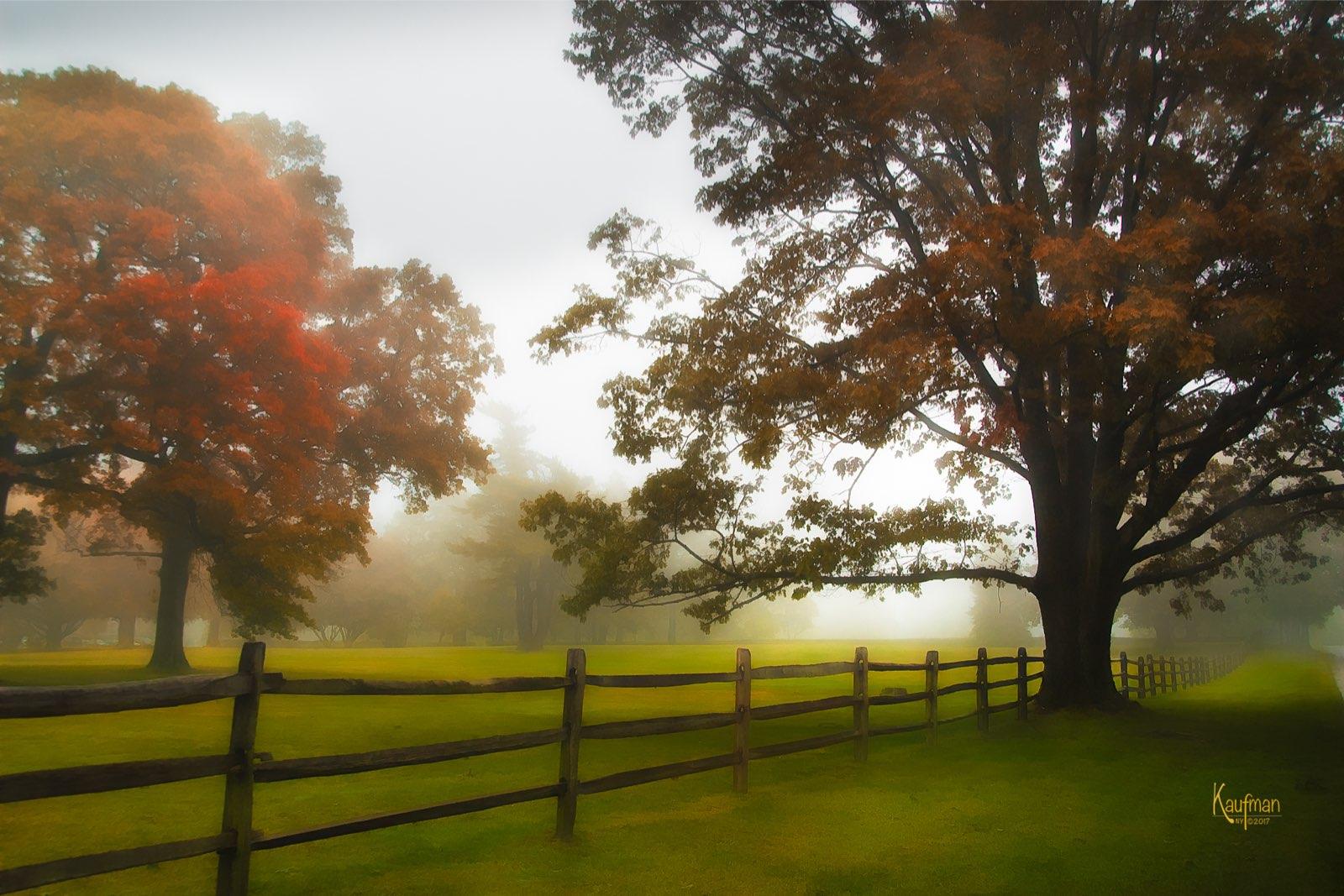 Fence & Meadows